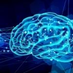 脳の成長から人の成長をマネジメントする